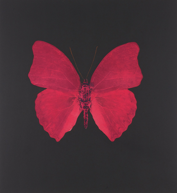 Hirst.2008.Unique Red Butterfly